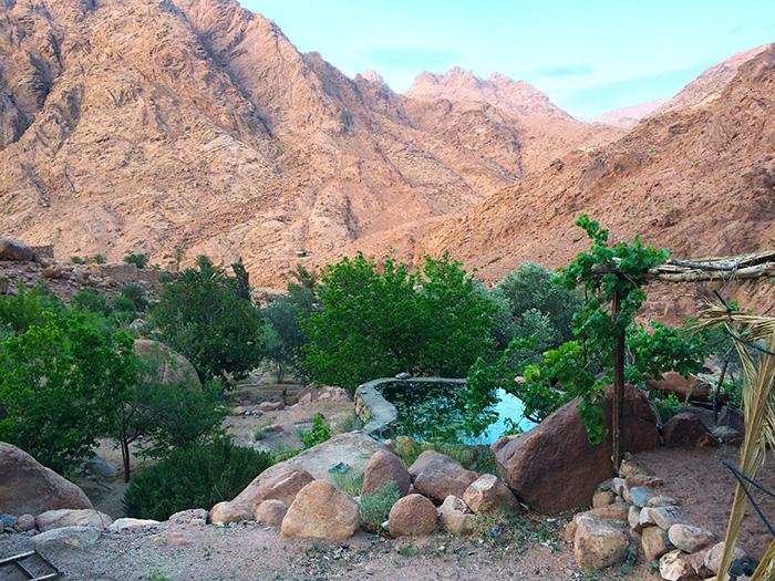 ואדי טלח בהר הגבוה בסיני - בוסתן הררי במדבר עם ברכת השקיה - טיולים לסיני - טיולים להר הגבוה - טויל לסנטה קתרינה - חצי האי סיני